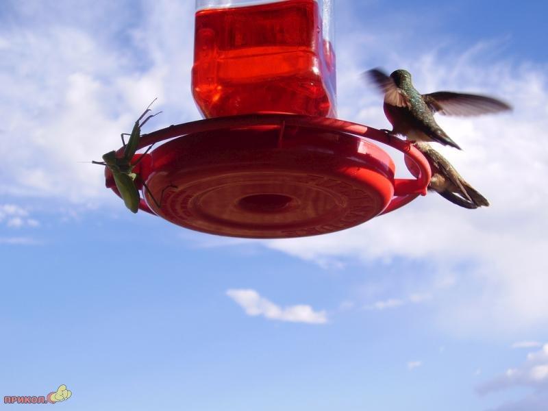 mantis-catches-bird-01