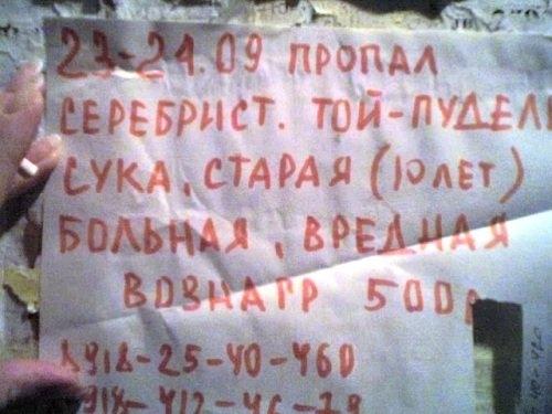 obyavleniya-38