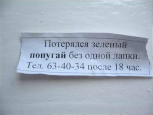 obyavleniya-61