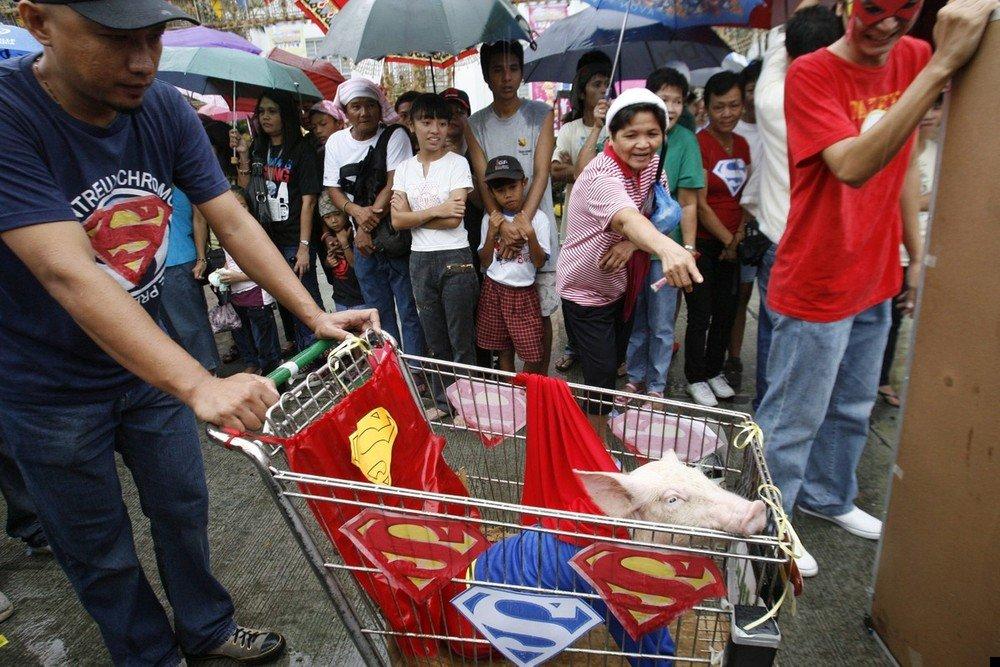 philippine-piglets-04