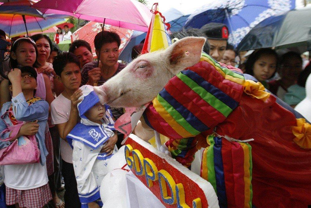 philippine-piglets-05