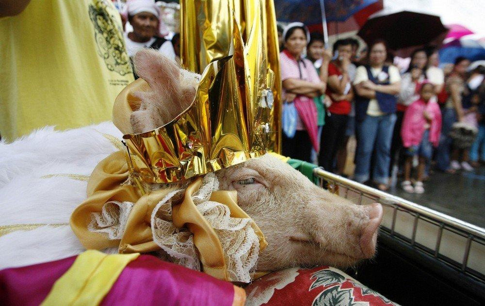 philippine-piglets-07