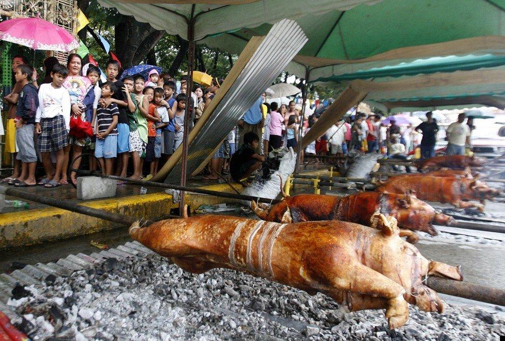 philippine-piglets-08