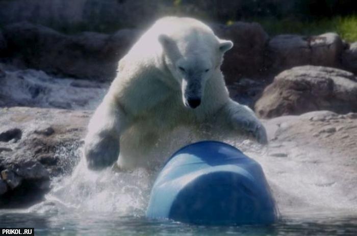 polar-bear-playing-02