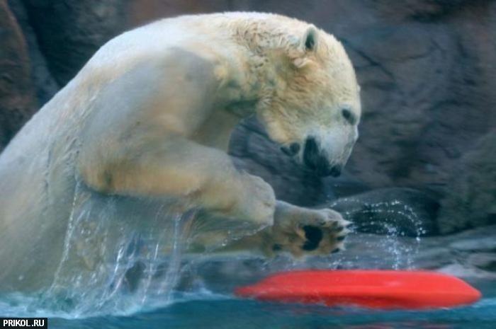 polar-bear-playing-08