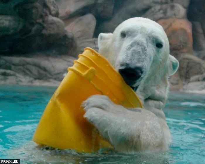 polar-bear-playing-12
