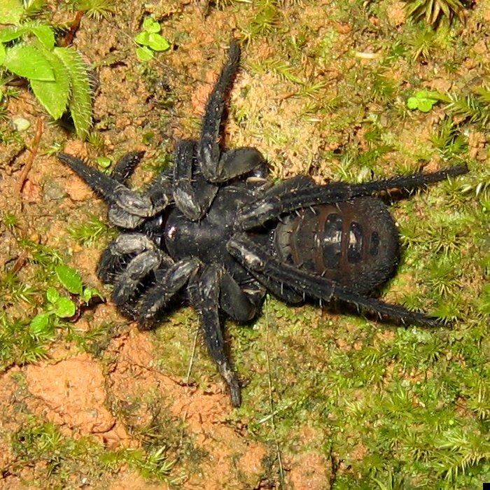 trapdoor-spider-07