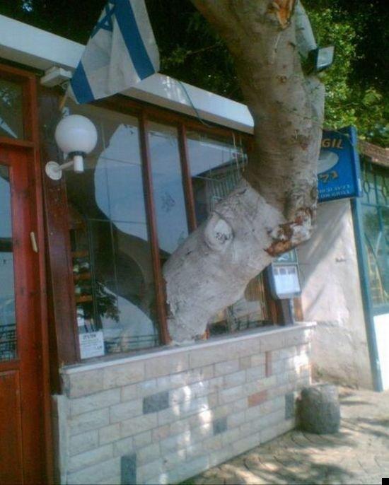 trees-140909-02