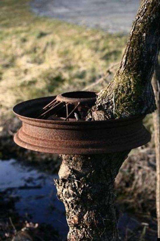 trees-140909-03