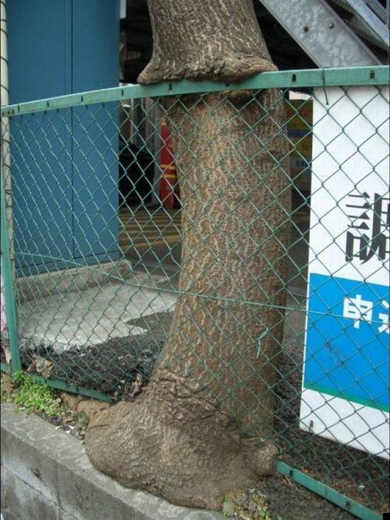 trees-140909-04