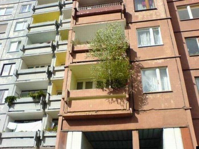 trees-140909-06