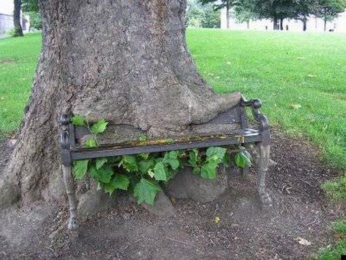 trees-140909-07
