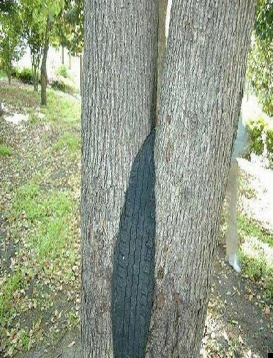 trees-140909-09