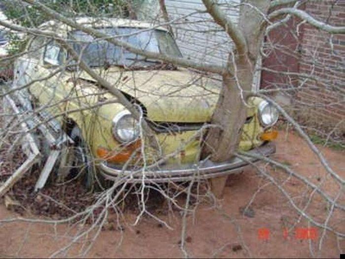 trees-140909-10