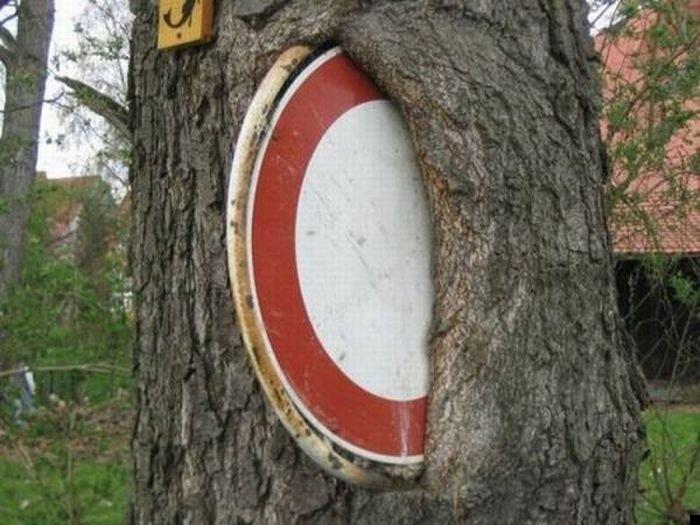 trees-140909-11