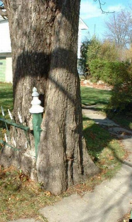 trees-140909-12