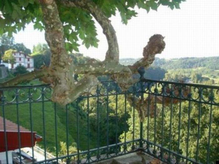trees-140909-14