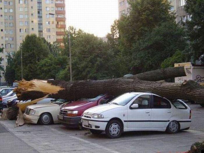 trees-140909-18
