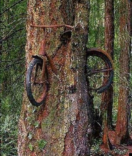 trees-140909-20