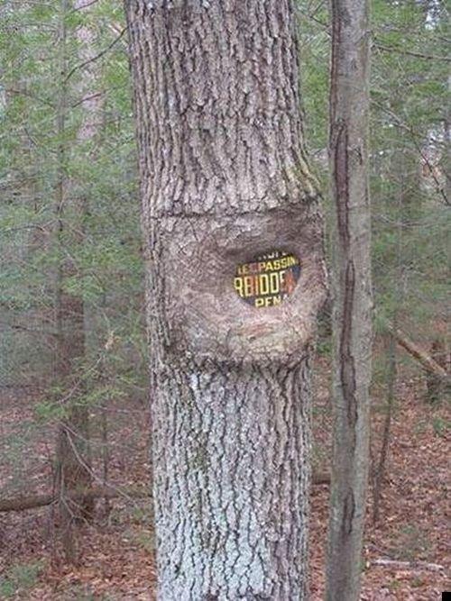 trees-140909-21