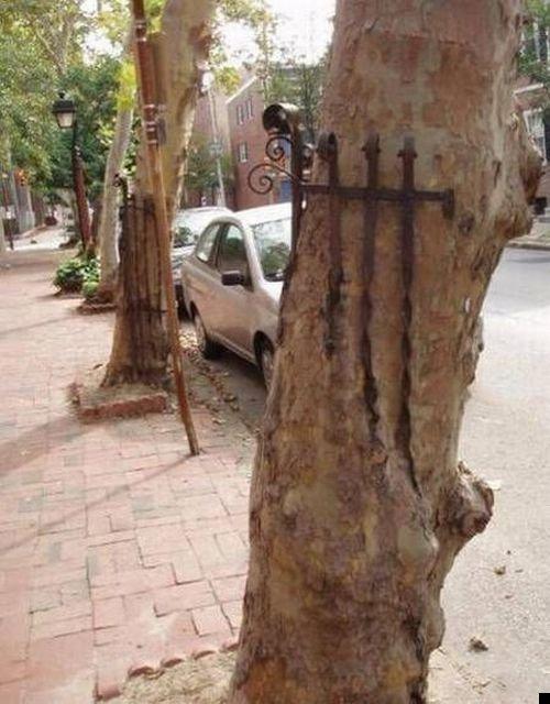 trees-140909-22