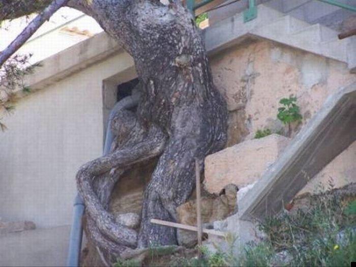 trees-140909-23