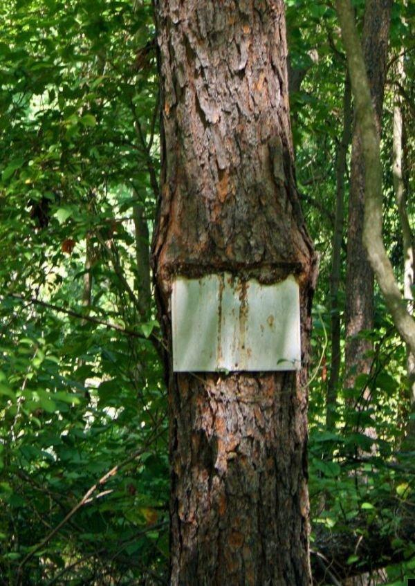 trees-140909-25
