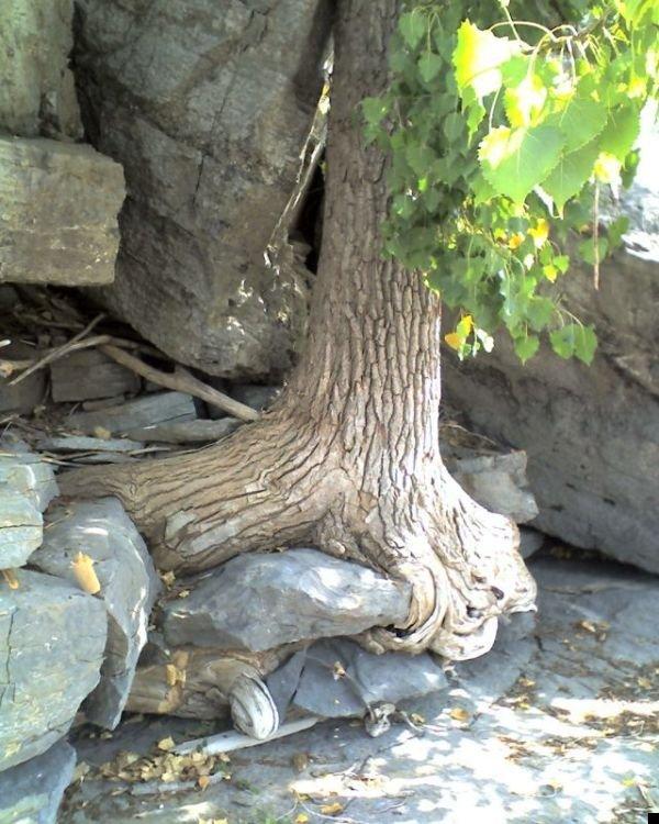 trees-140909-27