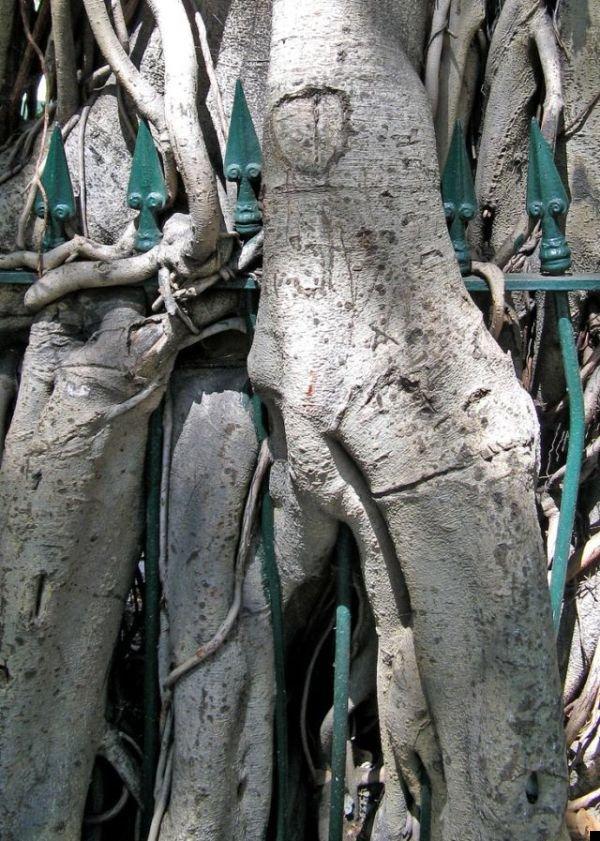 trees-140909-28