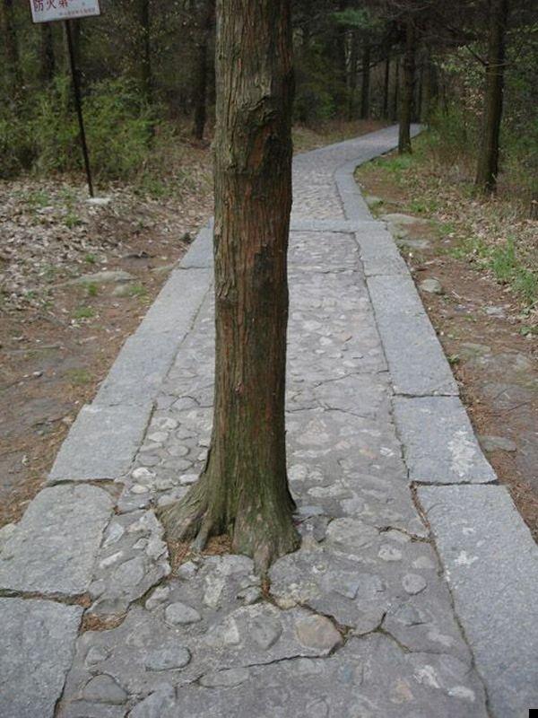 trees-140909-30
