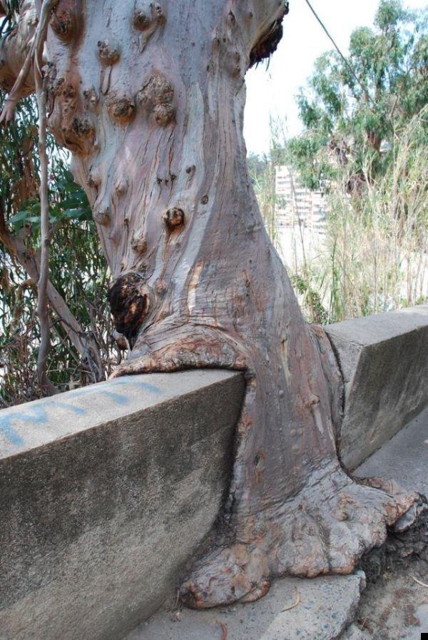trees-140909-32