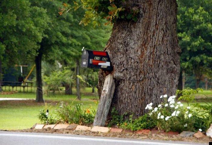 trees-140909-36
