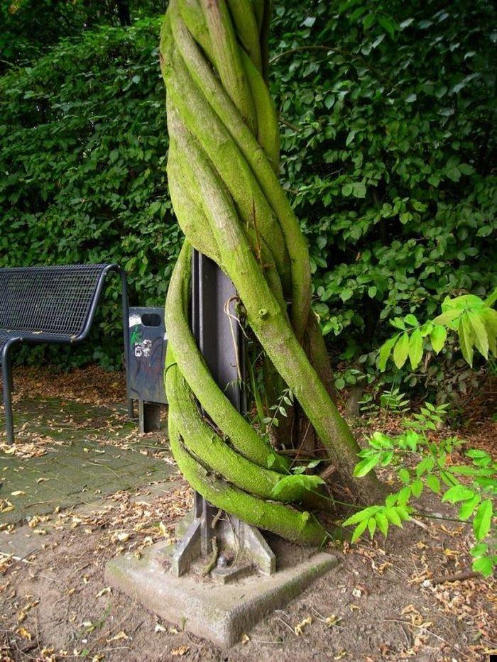 trees-140909-37
