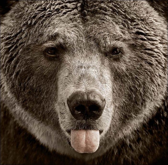 картинки медведи прикольные