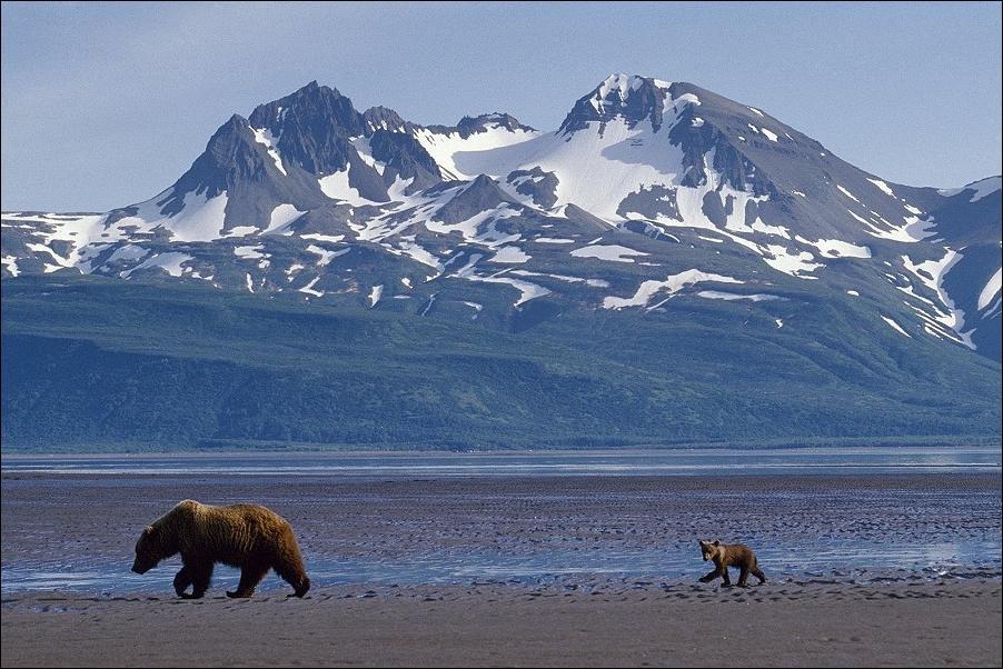 гора три медведя фото