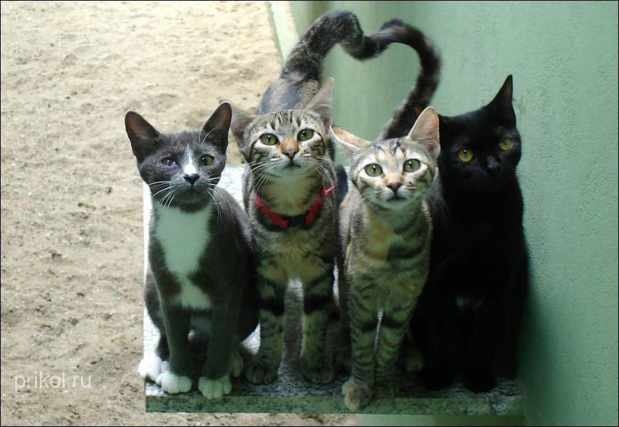 cats-cats-cats-158.jpg