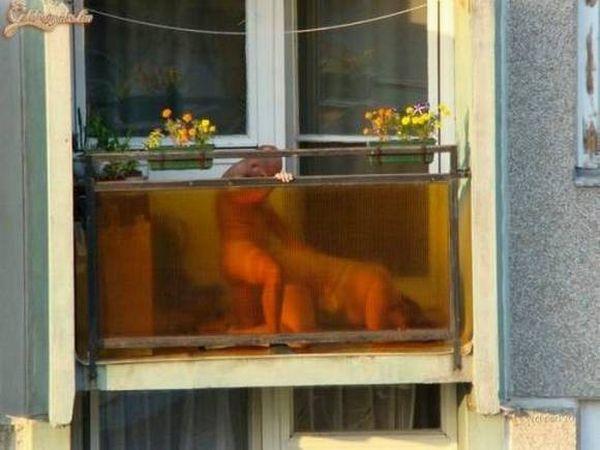 Курьезный секс на улице, как в россии проходят кастинг через постель