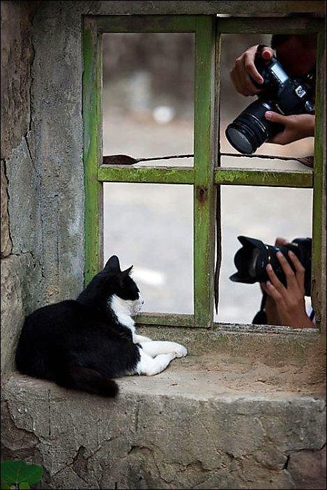 Подборка фотографий