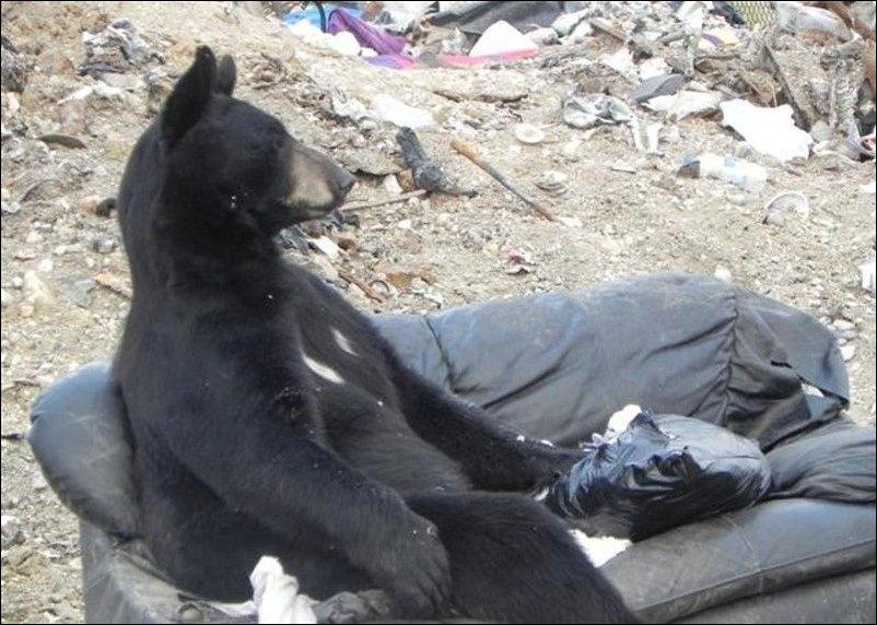 Медведь нашел диван
