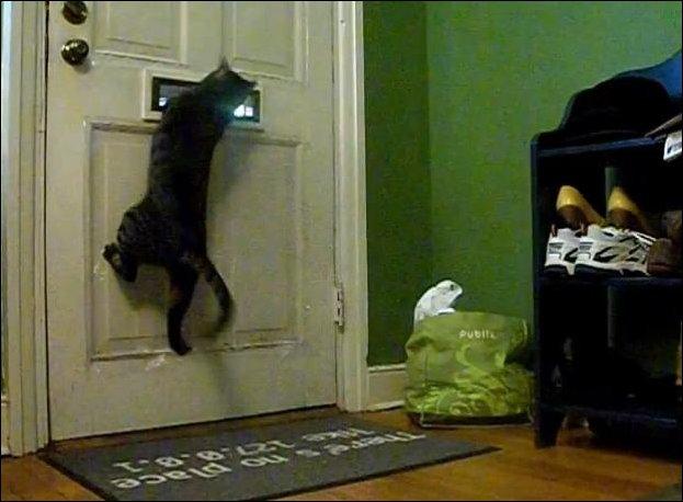 Кошачья почта