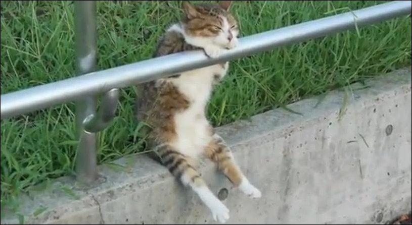 Кот на расслабоне