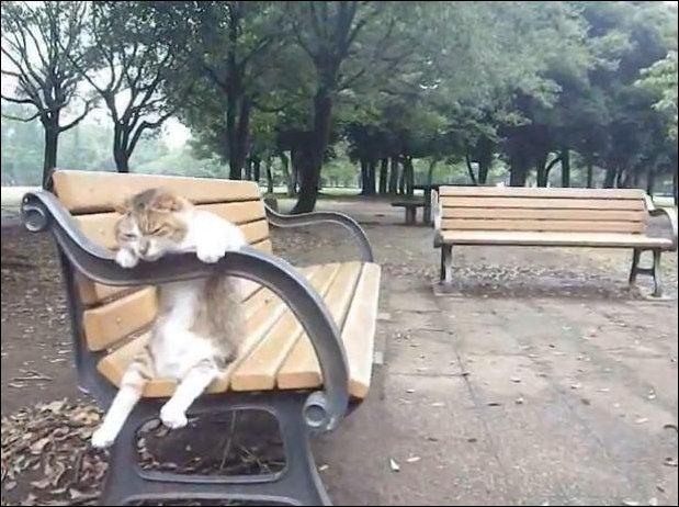 Осеннь. Кот. Грустит