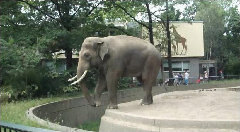 Случай в Берлинском зоопарке