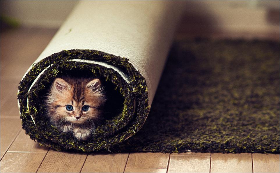 Позитивный котёнок