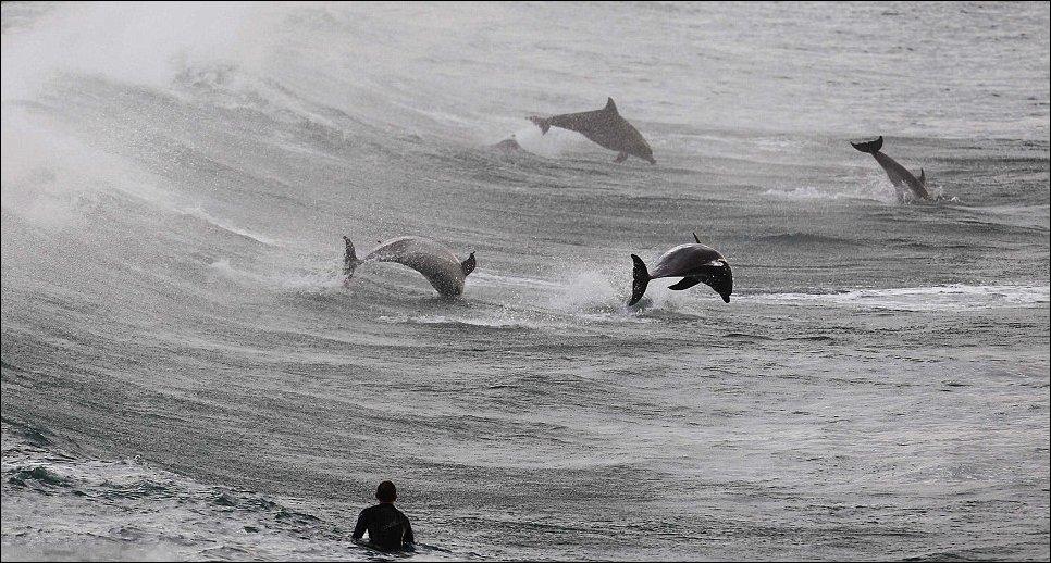 Серфинг с дельфинами