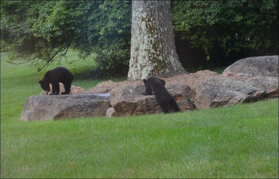 Медведи на детской горке