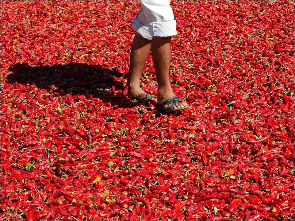 Сушка красного перца в Турции