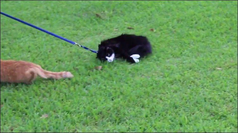 Кот который не гуляет сам по себе