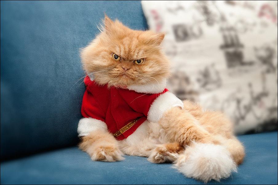 Гарфи - самый сердитый кот