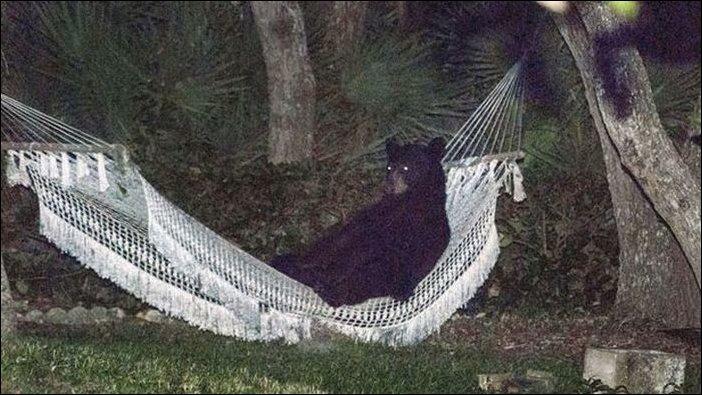 Медведь зашел полежать в гамаке